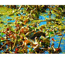 River Buffet Photographic Print