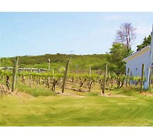 An Afternoon in the Vineyard Photographic Print