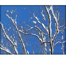 December Snow Photographic Print