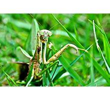 Preying Mantis Photographic Print