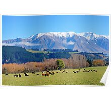 Afternoon graze Poster