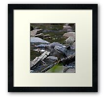 Bird - Cumberland River, Victoria Framed Print