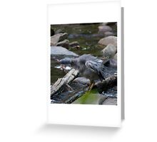 Bird - Cumberland River, Victoria Greeting Card