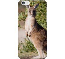 Eastern Grey Kangaroo Juvenile iPhone Case/Skin
