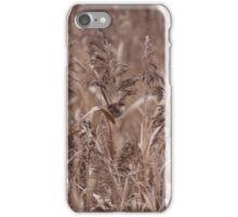 Female Wren in Long Grass iPhone Case/Skin