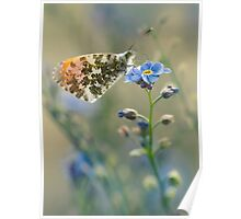 Small butterfly on blue flower Poster