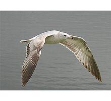 Seagull's Flight Photographic Print