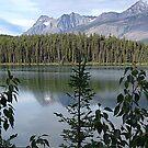 One Lake Too Many by Jann Ashworth