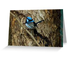 'All Smart in Blue' - Supurb Fairy Wren  Greeting Card