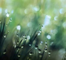Moss Drops by Sharon Johnstone