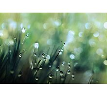 Moss Drops Photographic Print
