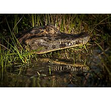 Caiman with Reflection Photographic Print
