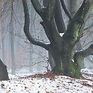 Fancy trees by jchanders