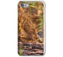 Scrub Wren iPhone Case/Skin