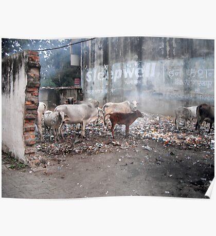 garbage disposal - India Poster
