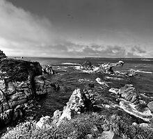 Whalers Cove by Kerri Gallagher