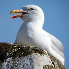 Screaming Seagull  by DEB VINCENT
