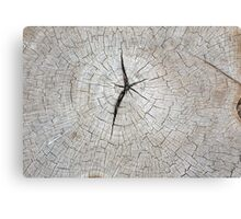 Top view of an old gray texture of a tree trunk Canvas Print