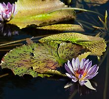 Waterlily in Lilac by Dawn Crouse