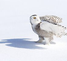 Shadowy Figure / Snowy Owl by Gary Fairhead