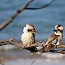 Blue Winged Kookaburras - Kemp Beach,  Qld. Australia. by Margaret Stanton