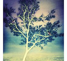 Bird Tree  Photographic Print