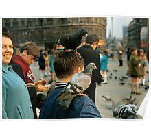 Trafalgar Sguare Pigeons, 1960s Poster