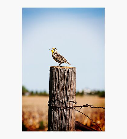 Song of the Western Meadowlark Photographic Print