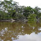 Fishing For Mudcrabs, Corindi River, NSW by aussiebushstick