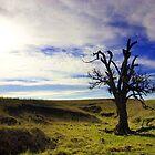 Survivor - Craggy Oak by Chris Pultz