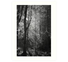 Mossy Trees Moulton Falls Art Print