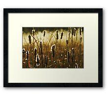 Winter Reeds Framed Print