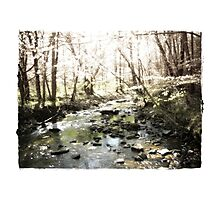 Spring by the Creek Photographic Print