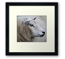 Pretty Ewe Framed Print