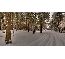Culbin Forrest Photographic Print