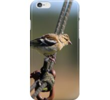 Chaffinch on a wire iPhone Case/Skin