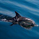 Dolphin Magic #3 by Odille Esmonde-Morgan