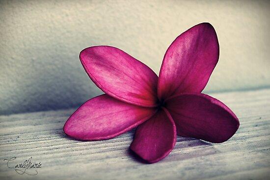 The Sugar Plum Fairy Flower by CarlyMarie