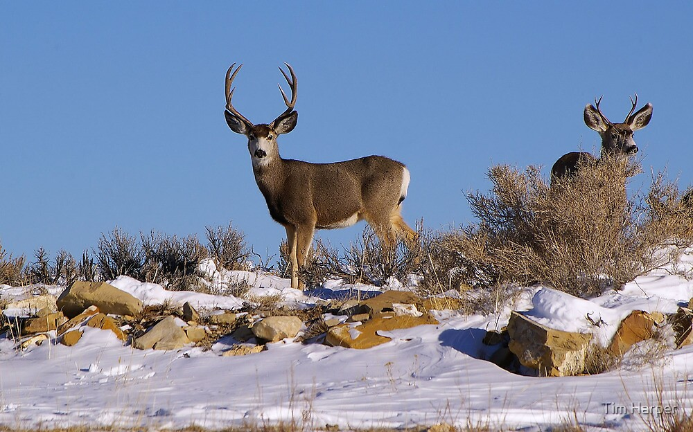Winter range..... by Tim Harper