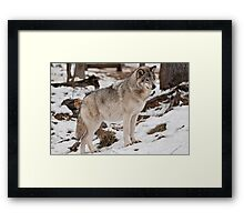 Distracted for the Moment Framed Print