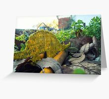 Roaming the Suburban Jungle Greeting Card