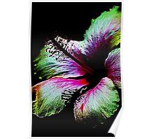 Night Hibiscus Fractalius Poster