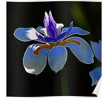 Orchid Fractalius Poster