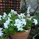 White Petunias by joycee