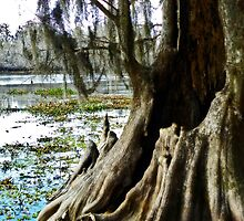 River Roots by designerbecky
