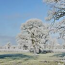 Cold Winter's Morning by AnnDixon
