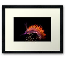 Flaming Tongue Framed Print