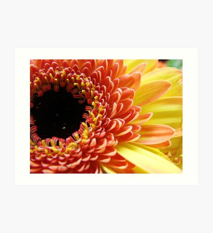 Multi-colored Gerbera Daisy Art Print