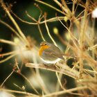 My Name is Robin II by LarsvandeGoor
