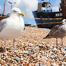 Seagulls at the Stade by destinysagent